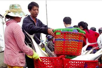 Thuận lợi khai thác đầu vụ cá Nam