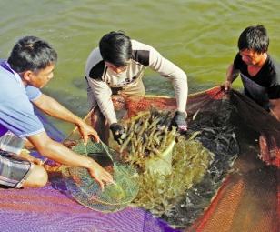 Niềm vui trọn vẹn cho tôm Bình Định