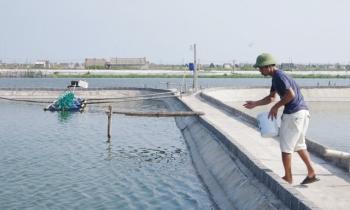 HTX thủy sản ở Nam Định: 'Hạt nhân' tập hợp các hộ nông dân