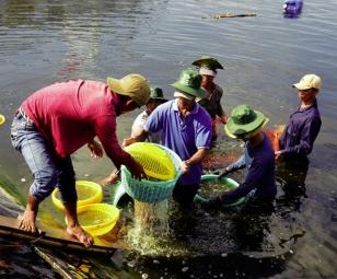 Thủy sản Việt Nam: Nỗ lực tăng trưởng nửa đầu năm