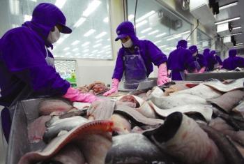 Nhiều tờ báo của Rumani đăng thông tin bôi xấu cá tra Việt Nam