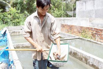 Hướng đi mới cho nghề nuôi thủy sản Quảng Nam