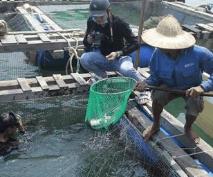 Quảng Ngãi: Hệ lụy lớn từ nuôi trồng thủy sản tự phát