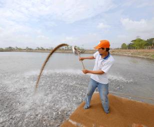 Lợi nhuận hài hòa từ nuôi gia công cá tra