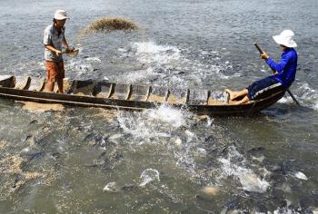 Ba giải pháp mới trong thức ăn thủy sản