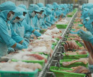 Kỳ tích mới của cá tra Việt Nam