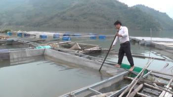 Nuôi cá lồng - hướng thoát nghèo bền vững ở xã Vầy Nư