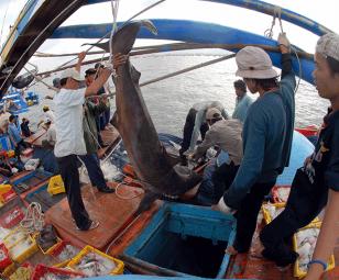 Tăng cường hoạt động bảo vệ nguồn lợi thủy sản