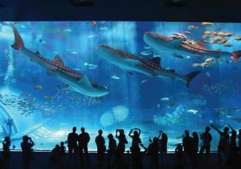 """Nhật Bản: Thủy cung """"hồi sinh"""" sau thảm họa sóng thần"""