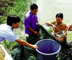 Kỹ thuật nuôi cá chình năng suất cao