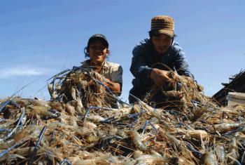 Tiêu chuẩn thủy sản: Đổi thay cùng xu thế