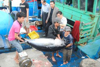 Trăn trở nghề khai thác cá ngừ đại dương