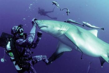 """Thợ lặn """"chơi đùa"""" cùng sát thủ đại dương"""