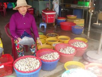 Tiền Giang: Ngao trúng giá nhưng mất mùa
