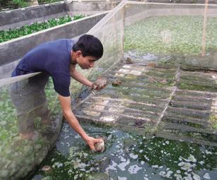 Vĩnh Long đẩy mạnh nuôi trồng thủy sản