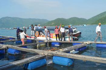 """Nghiên cứu cho thấy """"nuôi trồng thủy sản nhân đạo"""" có thể thúc đẩy tiêu thụ hải sản của Mỹ"""