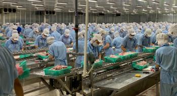 Trung Quốc: Thị trường hưng thịnh cho cá tra fillet Việt Nam