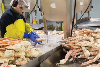 Bên trong nhà máy chế biến hải sản lớn nhất Seattle