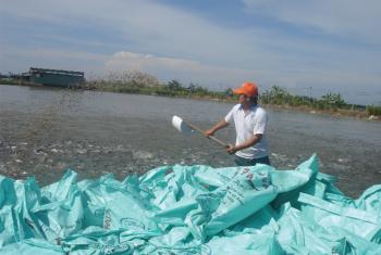 Xử phạt vi phạm hành chính trong lĩnh vực thủy sản (tiếp theo)