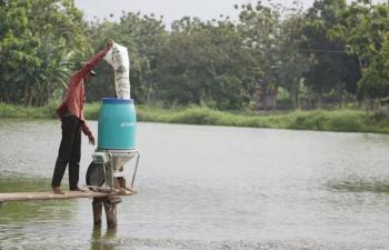 Indonesia: Ứng dụng công nghệ nuôi cá hồi vào nuôi tôm, cá tra và cá rô phi