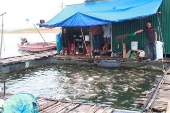 Thực hiện nghiêm quy định nuôi cá lồng trên hồ Thác Bà