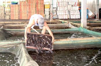 Tắc đường sang Trung Quốc, thủy sản rớt giá