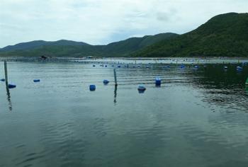 Cần gia cố lồng bè nuôi trồng thủy sản