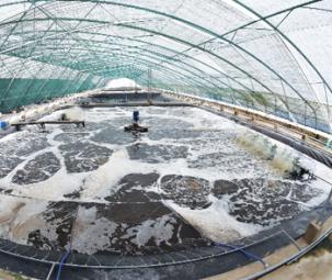 Công nghệ cao: Chìa khóa để ngành tôm bứt phá