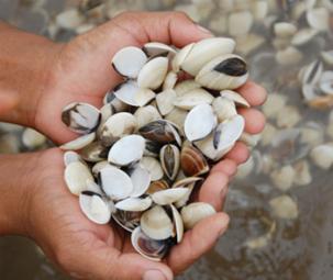 Truy tìm căn nguyên dịch bệnh thủy sản