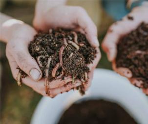 Giun đất: Protein thay thế trong thức ăn thủy sản