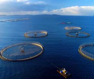 Phát triển nuôi biển từ hình mẫu Na Uy