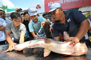 """Cá tra nuôi """"khổng lồ"""" có giá lên đến 350.000 đồng/kg"""
