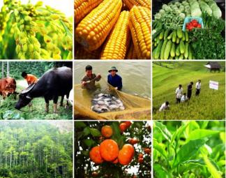 Nông nghiệp 2020: Thị trường quyết định tăng trưởng