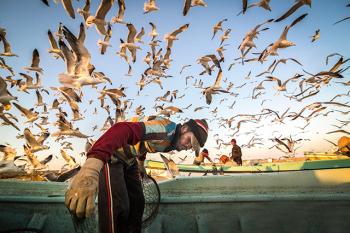 Những bức ảnh ấn tượng về thủy sản