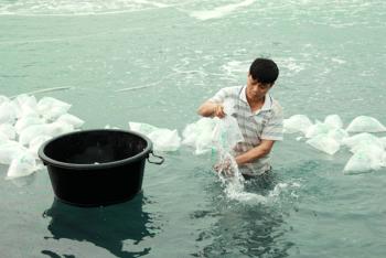Hà Tĩnh: Thả hơn 520 triệu tôm giống vụ xuân hè 2020