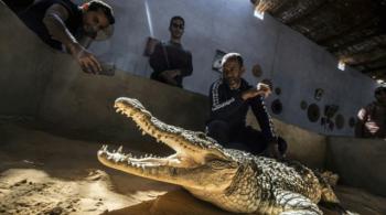Người dân Nubian thuần hóa cá sấu thành thú cưng