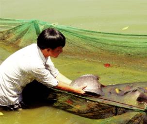 Tìm đường sống cho cá quý sông Sêrêpốk