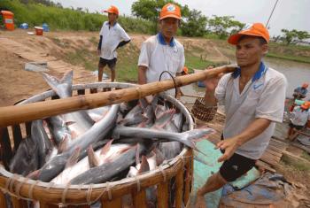 Tháo gỡ khó khăn ngành hàng cá tra