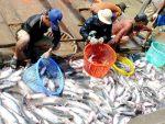 Xuất khẩu cá tra sang Mỹ tăng 22,7%