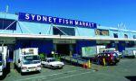 Hấp dẫn chợ cá Sydney