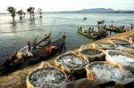 Cà Mau: Ngư dân lại được mùa cá khoai