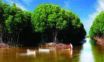 """Thừa Thiên - Huế: Rừng ngập mặn """"kéo"""" tôm, cá trở về"""