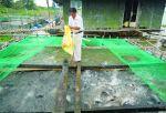 ĐBSCL: Trái chiều giá bán nhiều loại cá