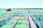 Bà Rịa - Vũng Tàu: Sắp xếp lại cơ sở nuôi cá lồng bè