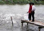 Tiền Giang: Cá tra giống thiếu nguồn cung