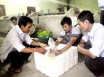 Giải pháp đực hoá cá rô phi đơn tính: Bước tiến mới trong sản xuất giống thuỷ sản
