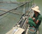 Thị trấn Văn Quan (Lạng Sơn): Phát huy hiệu quả mô hình nuôi cá lồng