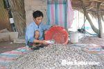 Bạc Liêu: Thoát nghèo nhờ nuôi sò huyết
