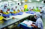 Kiểm soát chặt chẽ vật tư nông nghiệp