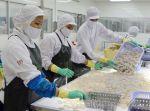 Thị trường tôm bắt đầu phục hồi tại Trung Quốc